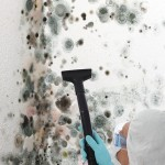 Black-Mold-Remediation-Weston