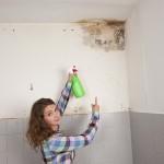 Mold Remediation Weston FL