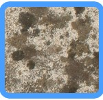 Water-Mold-Removal-Weston