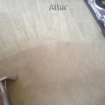 Weston -Carpet-Cleaning-Company